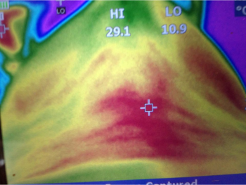 A thermography camera, a great asset to help with symetry of the horses back.